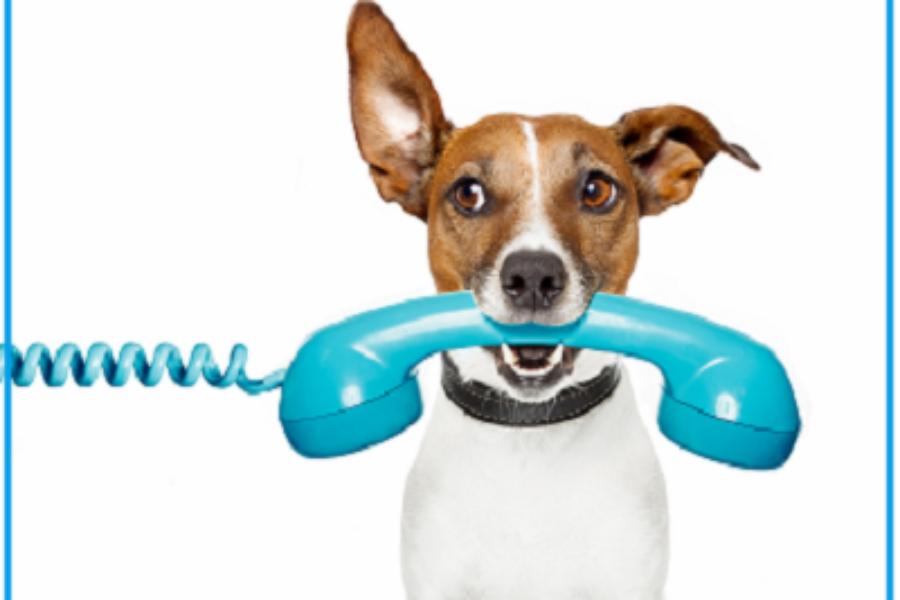 Телефонные продажи: как непотерять клиентов